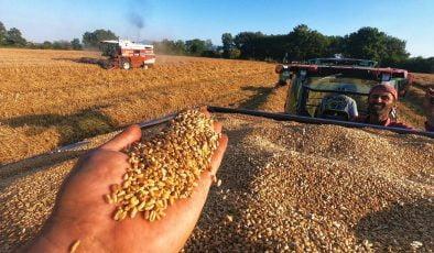 Çukurova Buğday Hasadından Yüksek Rekolte Bekleniyor