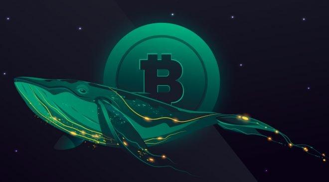 2021 Yılında Bitcoin'den 500 Milyon Dolar Değerinde Kaçış Oldu